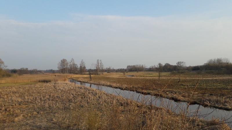 Rivière Narewka, Bialowieza