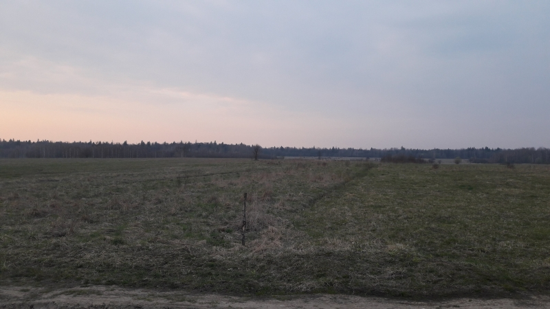 Forêt primaire, Bialowieza