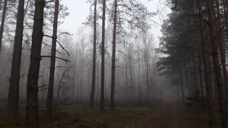 Forêt Bialowieza