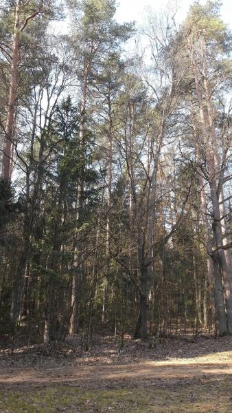 Forêt Kosy Most