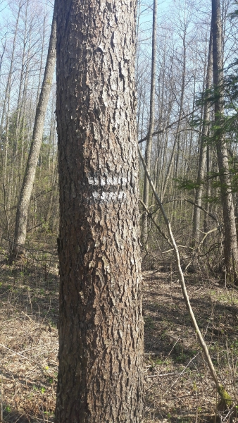 Repère, Forêt Kosy Most, Bialowieza