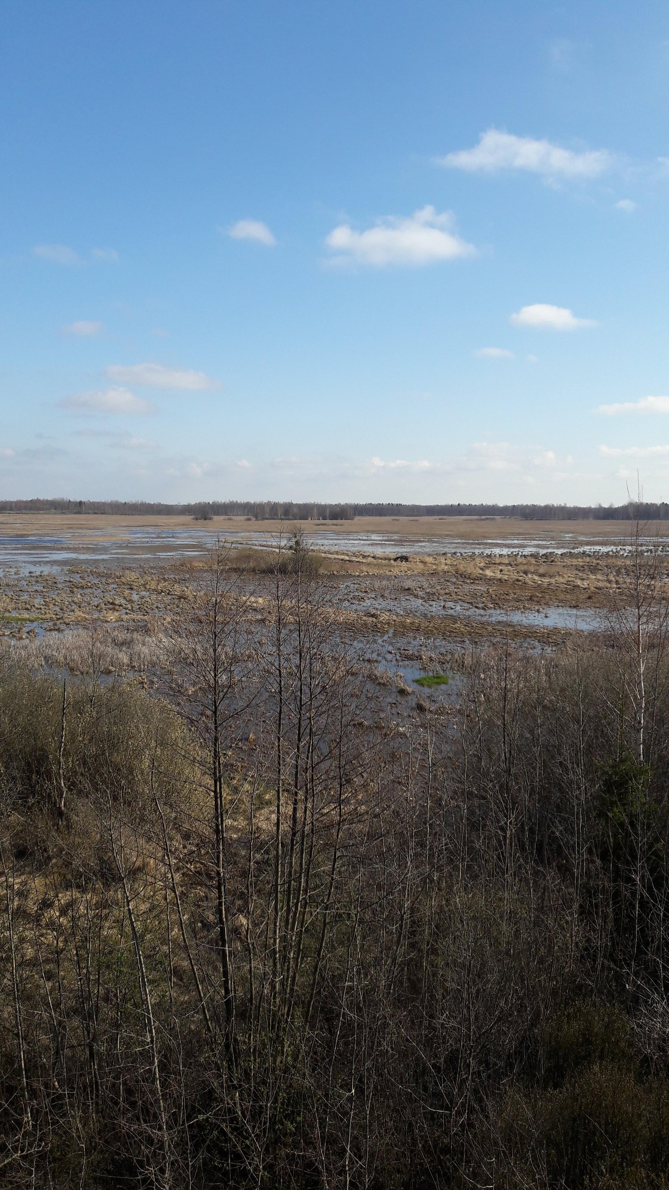 Marais de Siemianowka, frontière Biélorusse