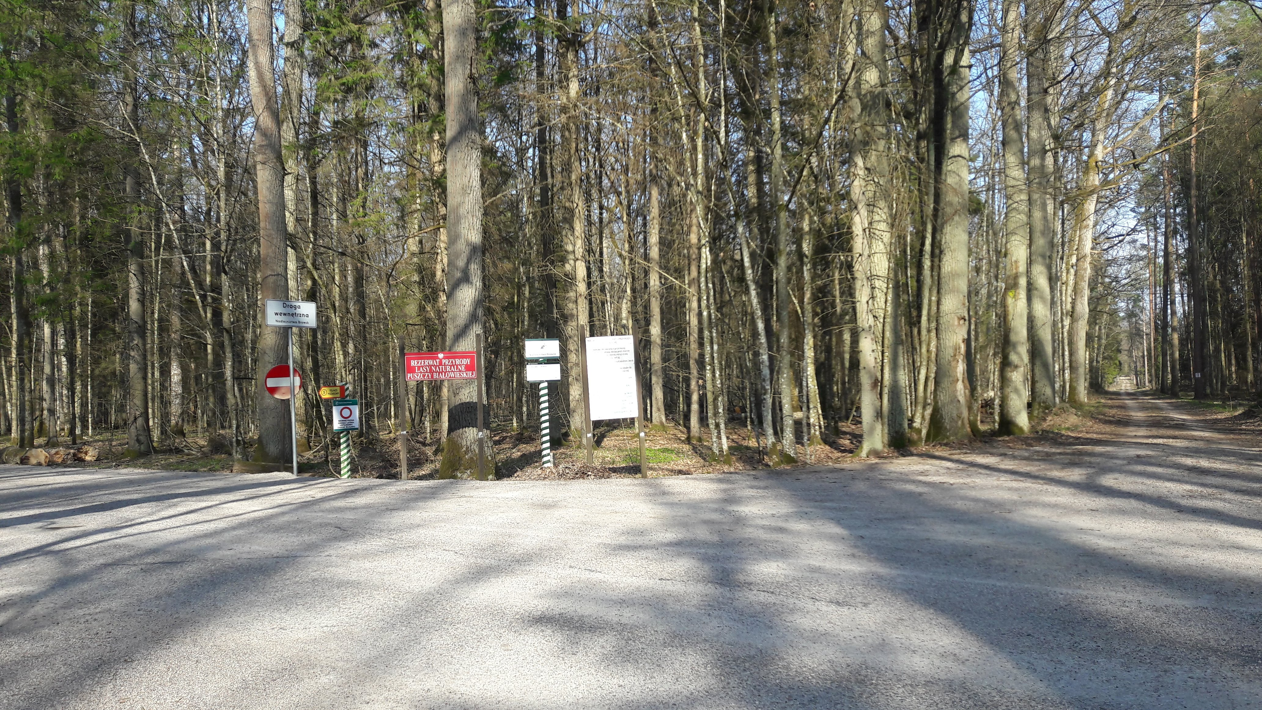 Route forestière Narewkowska