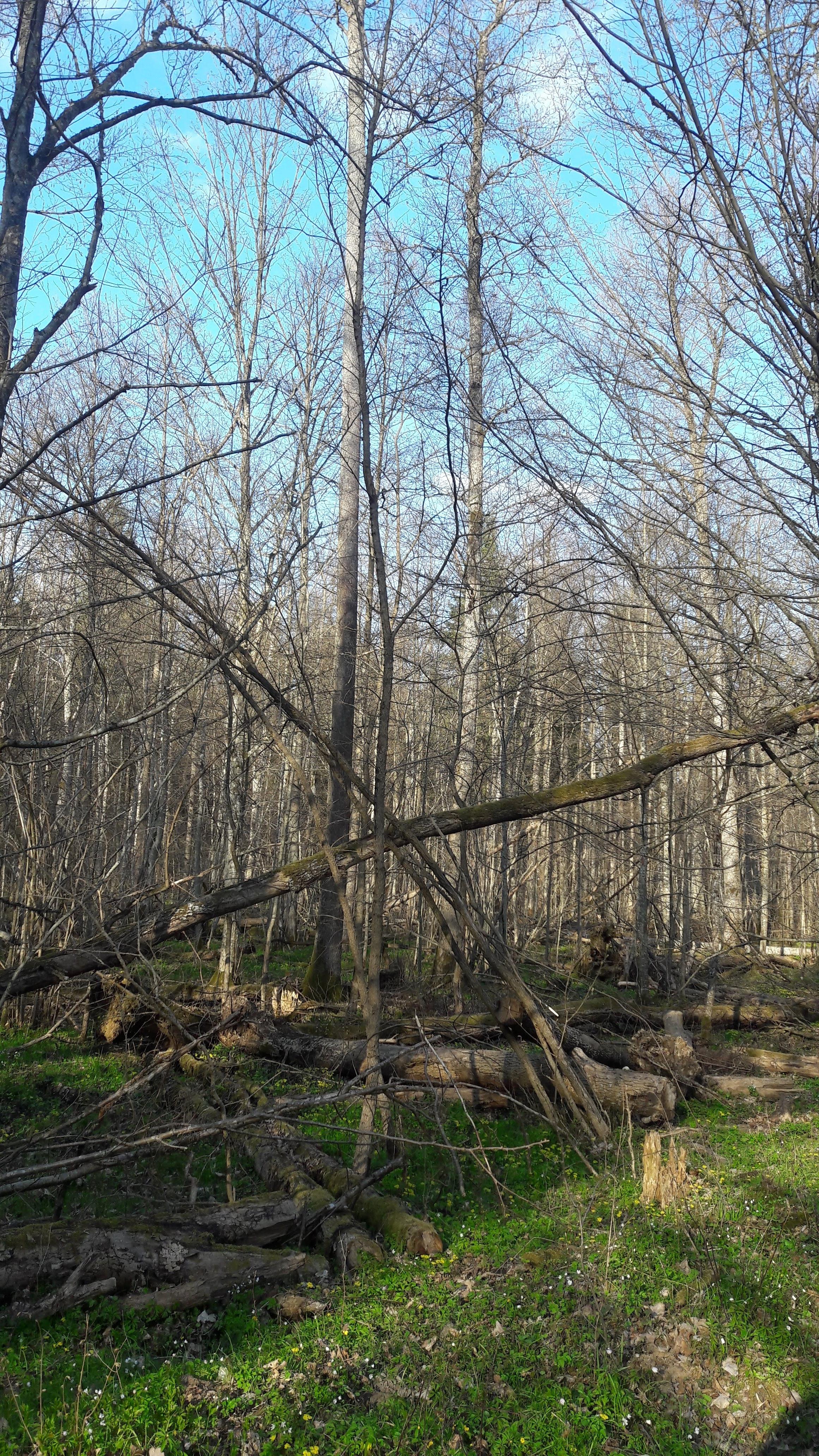 Forêt de Budy
