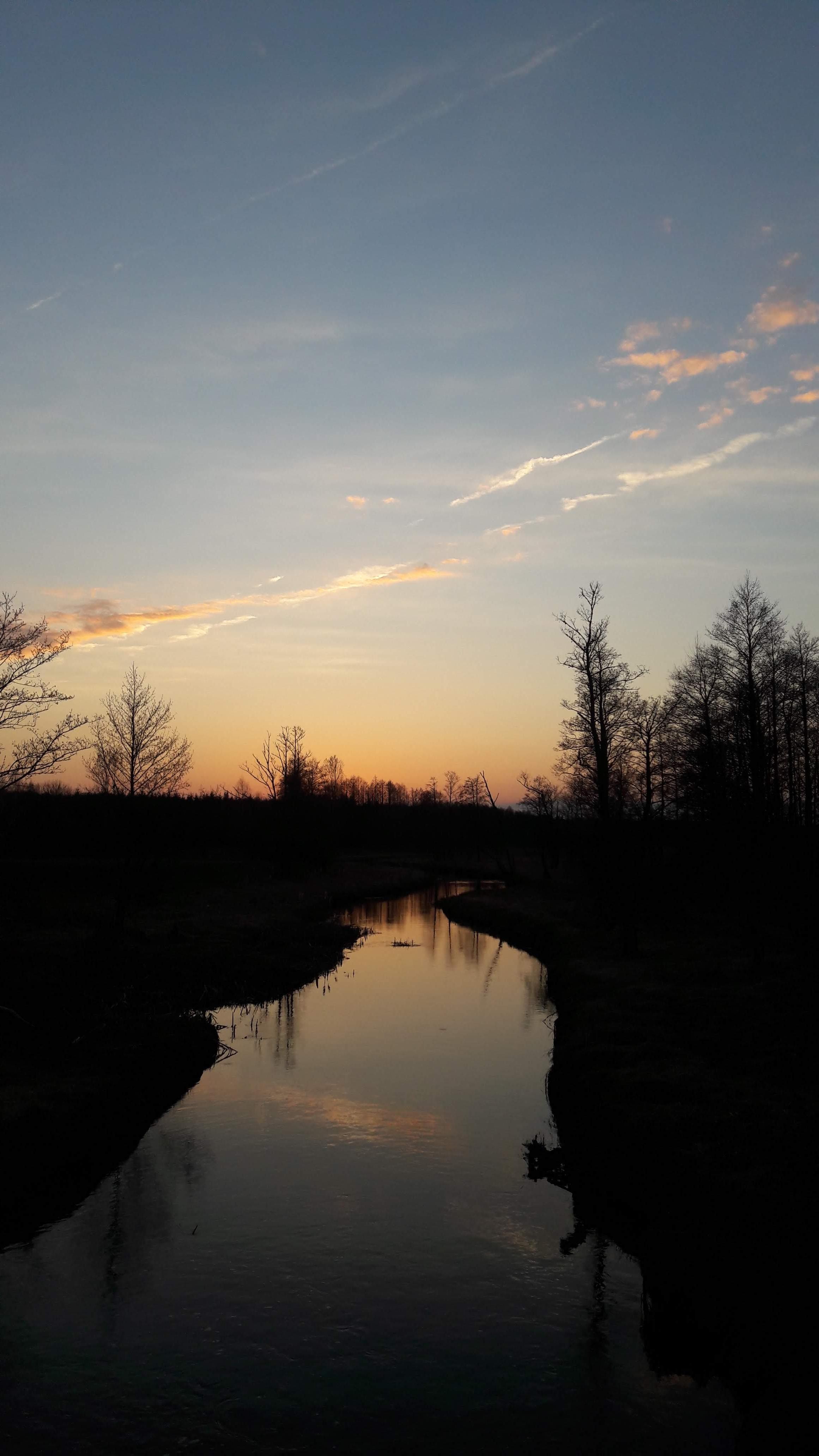 Bialowieza,  rivière Narewka