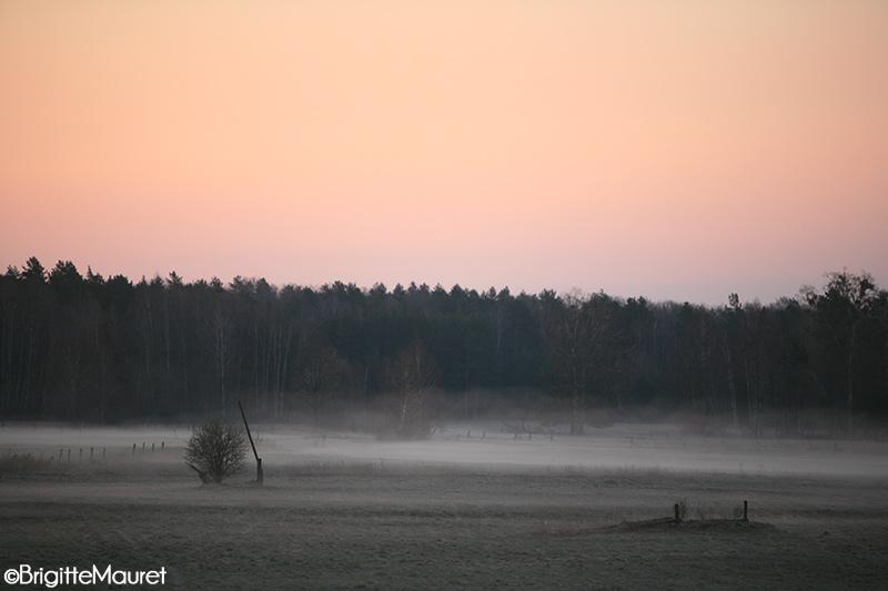 Pologne, Lesna