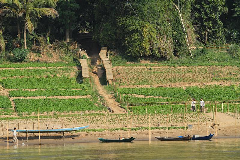 laos-0961