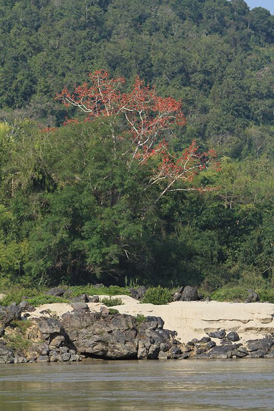 laos-1053