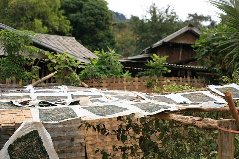laos-1491