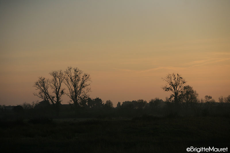 Paysage Charente-maritime